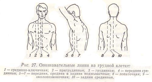 Схема топографические линии грудной клетки