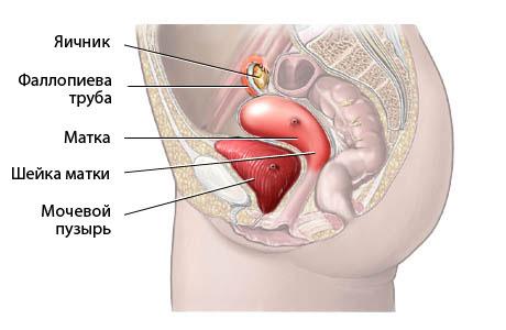 вагини кр план фото
